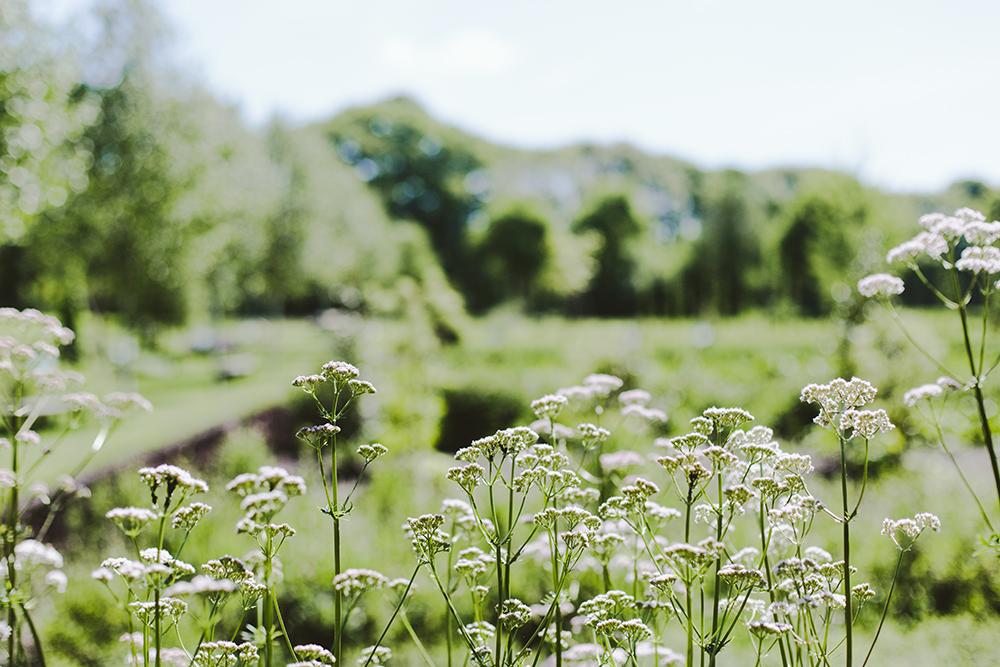 Bezoek de tuinen van A.Vogel. In de Veluwse bossen van Landgoed Zwaluwenburg liggen de A.Vogel tuinen met talloze geneeskrachtige kruiden en planten. Het is dé plek voor een gezellig en gezond dagje uit midden in de natuur.