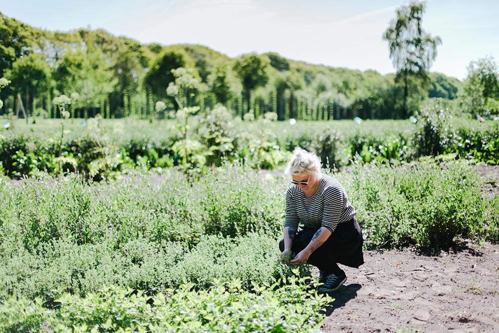 In de Veluwse bossen van Landgoed Zwaluwenburg liggen de A.Vogel tuinen met talloze geneeskrachtige kruiden en planten. Het is dé plek voor een gezellig en gezond dagje uit midden in de natuur.