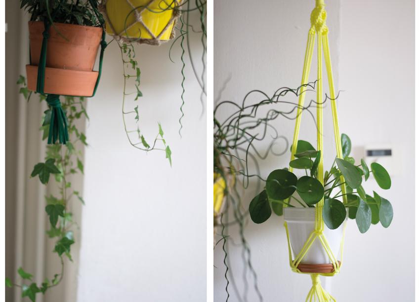 Tweeluik-hangplanten