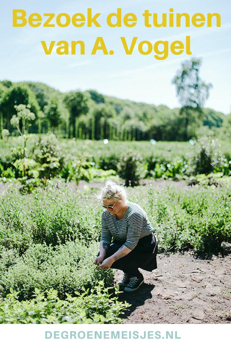Op Landgoed Zwaluwenburg liggen de A.Vogel tuinen met talloze geneeskrachtige kruiden en planten. Het is dé plek voor een gezellig en gezond dagje uit midden in de natuur.