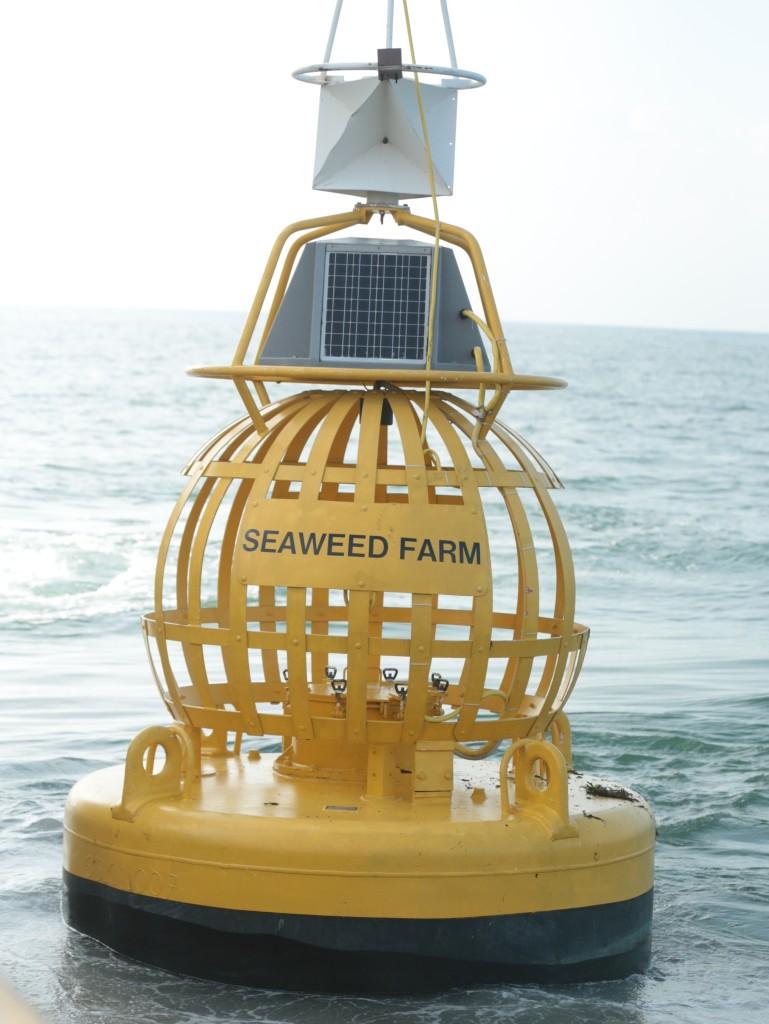 seaeweedfarm